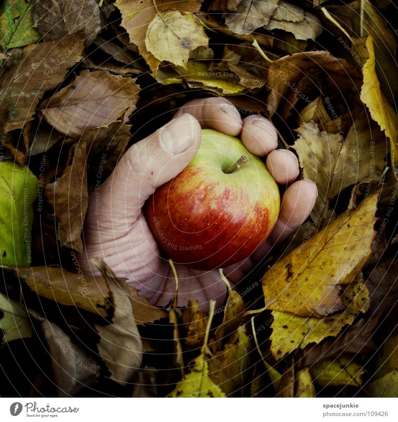 late harvest Leaf Autumn Hand Seasons Tree Forest Whimsical Autumn leaves Autumnal colours Joy Apple Fruit Catch To hold on Old Harvest