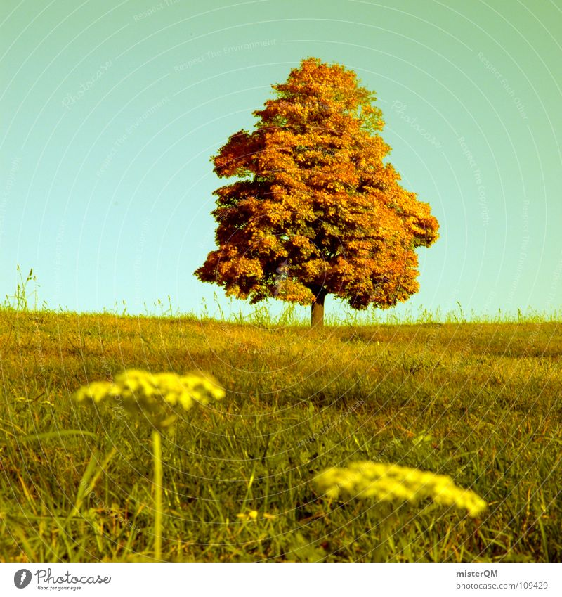 autumnal species Autumn Green Tree Horizon Half 50 Flower Foreground Background picture Meadow Blossom Beautiful Relaxation Diffuse Germany Grass Field Tobacco