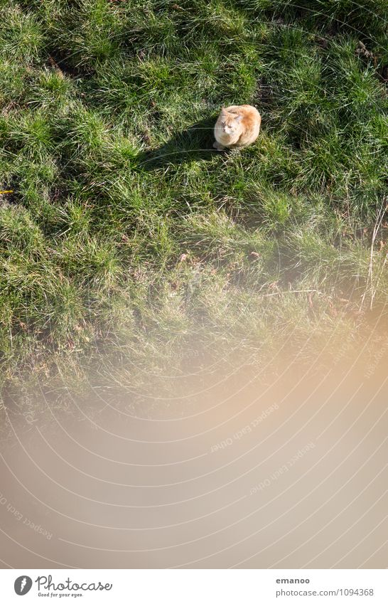 Cat Green Relaxation Loneliness Landscape Animal Far-off places Meadow Grass Freedom Garden Bright Above Fear Sit Wait