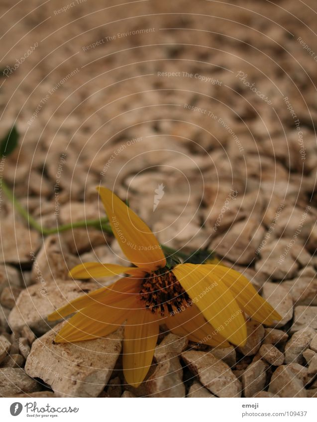 Nature Plant Summer Flower Yellow Death Lanes & trails Stone Warmth Orange To go for a walk Physics End Near Hot Blossoming