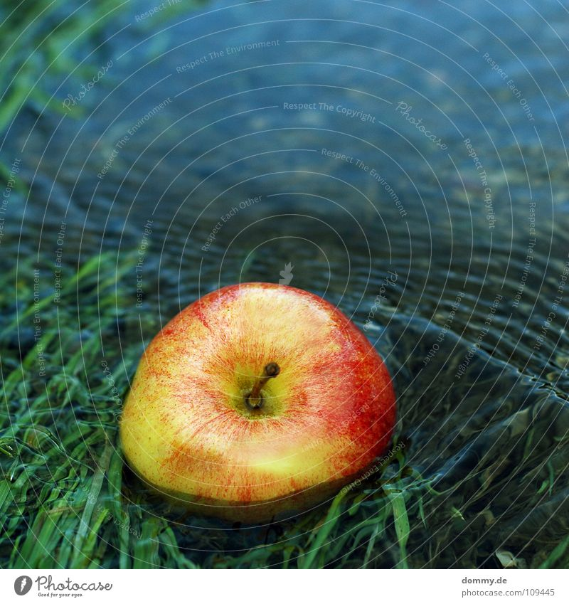Nature Water Green Blue Red Nutrition Grass Coast Food Fruit Sweet River Apple Anger Stalk Fluid