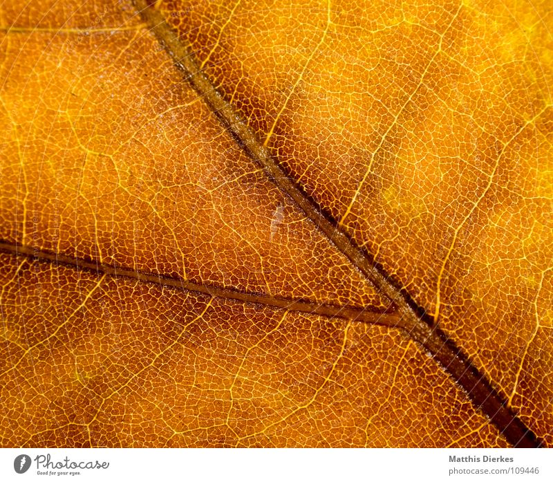 Yellow Autumn Background picture Autumn leaves Autumnal Section of image Autumnal colours Rachis