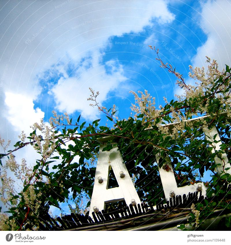 wild growth two Typography Clouds Green Plant Blossom Leaf Eaves Detail Sky Letters (alphabet) Characters Sign Sun Blue uncontrolled growth entwined