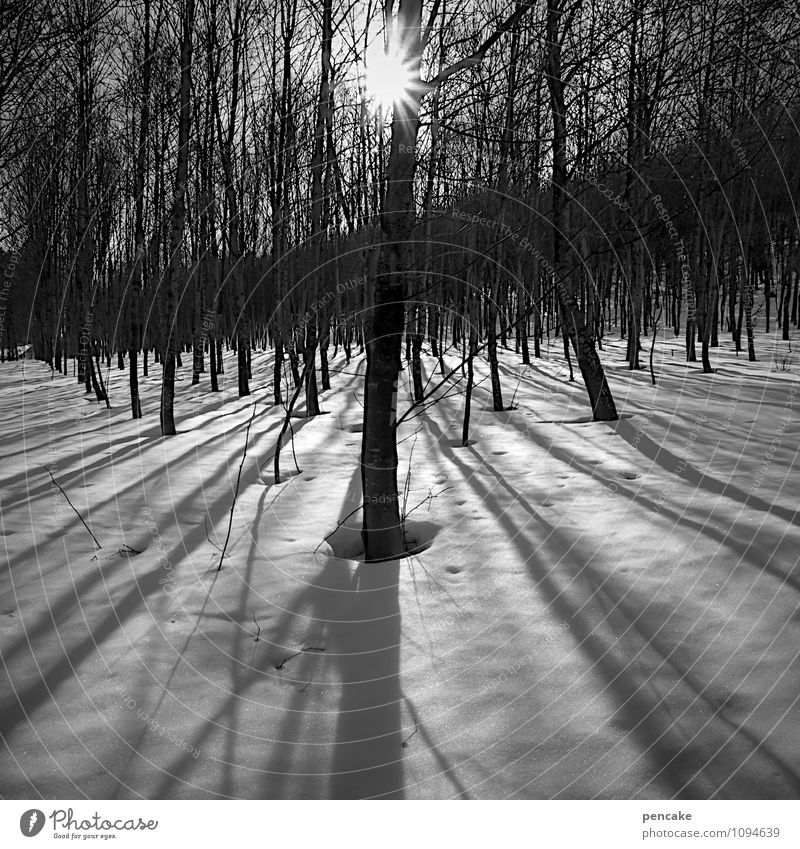 Standing still Nature Landscape Elements Winter Beautiful weather Ice Frost Snow Forest Esthetic Relationship Loneliness Idyll Shadow play Calm Long Escape