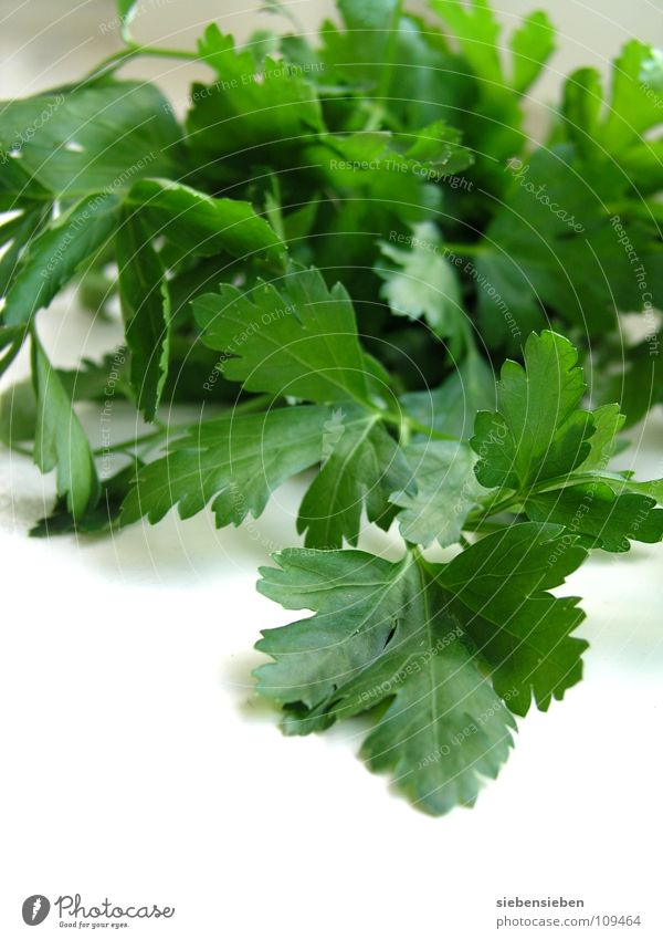 ingredient Parsley Herbs and spices Cooking Nutrition Kitchen Healthy Refine Plant Fresh Herb garden Food Gastronomy Household Vegetable Aromatic Delicious