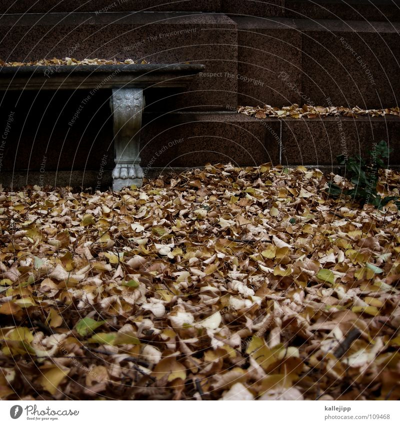 Old Loneliness Leaf Calm Cold Life Autumn Stone Brown Masculine Park Transience Frost Past Symbols and metaphors Bench