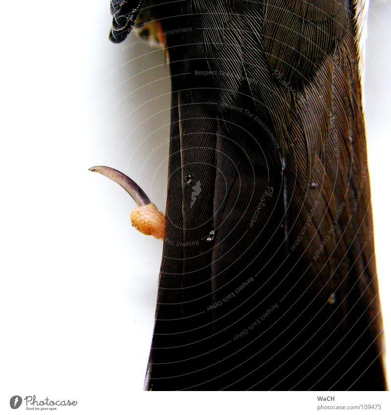Bird Drops of water Drop Feather Lie Infinity Claw Crow Migratory bird Hind leg