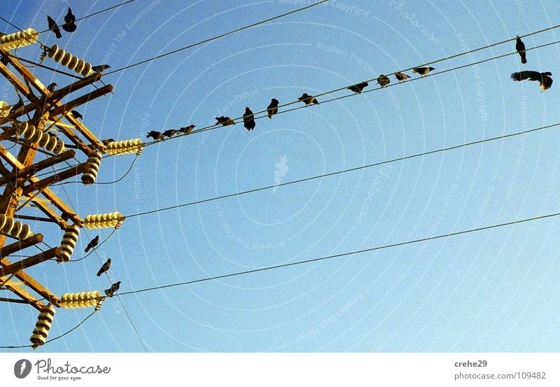 Nature Beautiful Sky Blue Cold Bird Tall Energy industry Electricity Might Cable Clarity Electricity pylon Crow