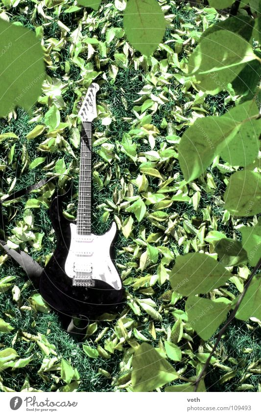 Green Calm Leaf Autumn Meadow Music Concert Rock music Guitar Musical instrument