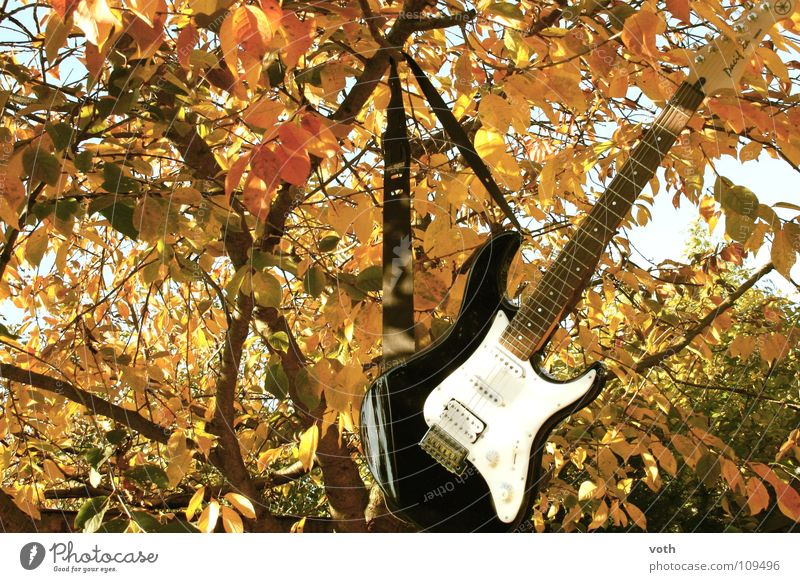 Chill in the tree Autumn Leaf Tree Calm Relaxation Concert Music Rock music Guitar