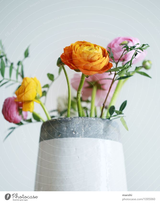 Ranunculus Ranunculus Nature Plant Flower Moody Blossom Buttercup Vase Decoration Blossoming Spring fever Spring flower Orange Pink Beautiful Bouquet