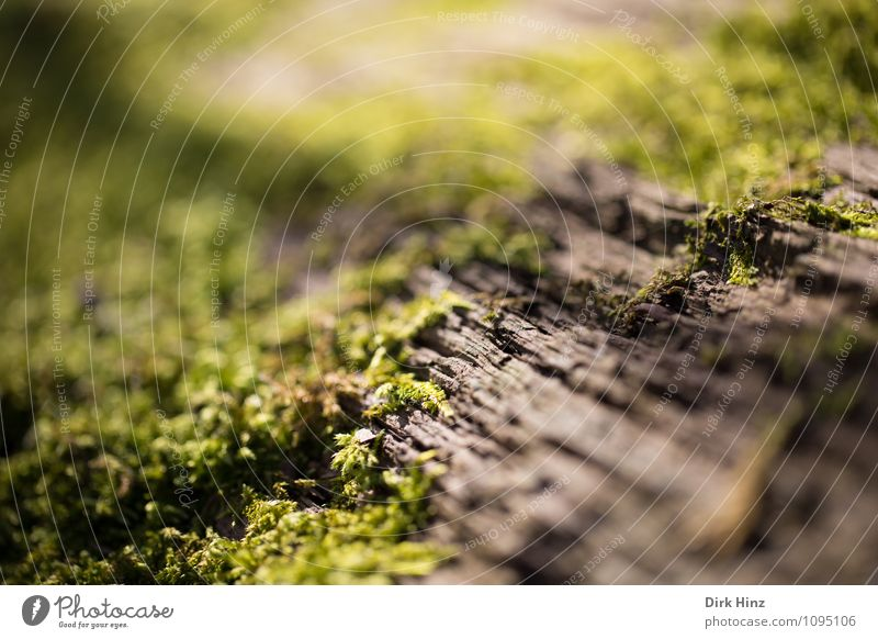 Bark Moss Environment Nature Plant Tree Wild plant Forest Wood Beginning Growth Change Light green Habitat Tree bark Lichen Enliven Biological Woodground