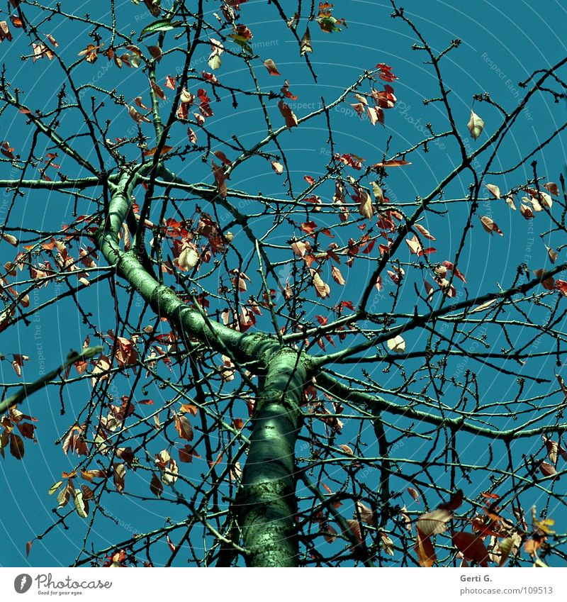 dream tree Autumn Leaf Autumn leaves Sky blue Deciduous tree Physics Multicoloured Green Old Brittle Transience Tree Cherry tree cherry leaves Autumnal Blue