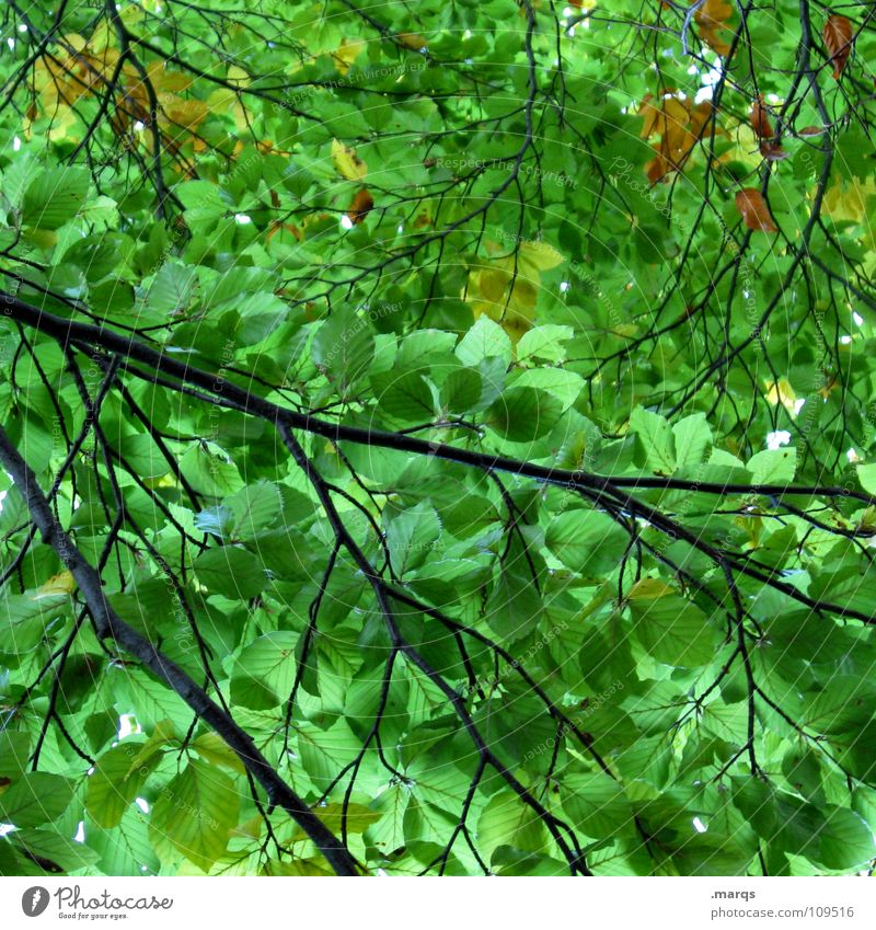 impermeable Leaf Green Bright green Forest Closed Growth Juicy Force Tree Photosynthesis Plant Botany Undergrowth Wood flour Nature Power Seasons Branch Twig