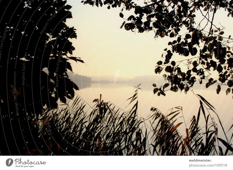 Lake in the morning Water Fog Haze Fishing (Angle) Vacation & Travel Nature Common Reed Tree Morning Dawn Morning fog Summer Autumn Romance Sadness