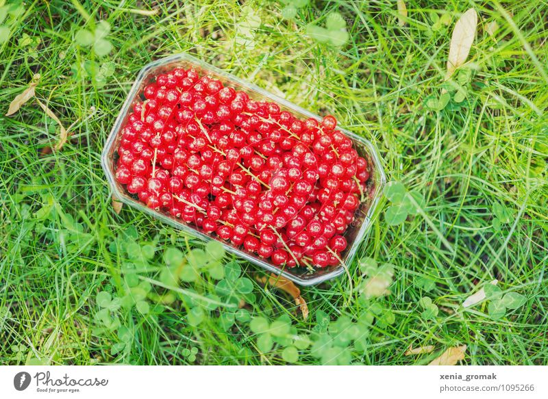 currants Food Fruit Dessert Nutrition Lifestyle Wellness Harmonious Well-being Relaxation Leisure and hobbies Vacation & Travel Tourism Trip Adventure Camping