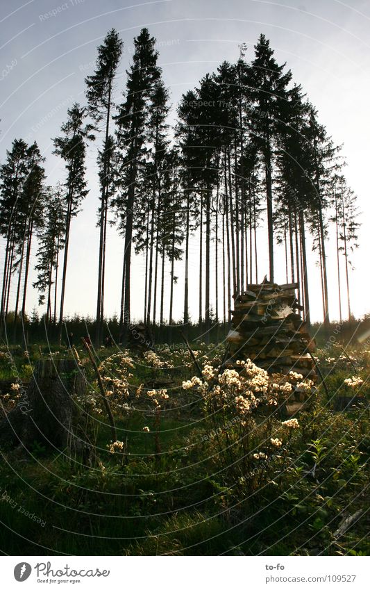 autumn Forest Tree Clump of trees Spruce Autumn Light Thuringia Meadow
