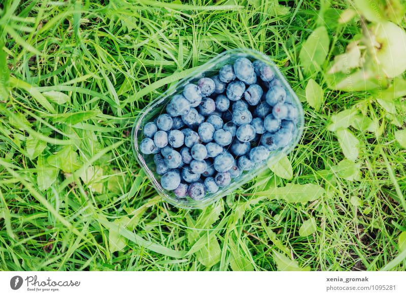 blueberries Food Fruit Nutrition Picnic Organic produce Vegetarian diet Diet Bowl Lifestyle Healthy Healthy Eating Athletic Fitness Overweight Wellness