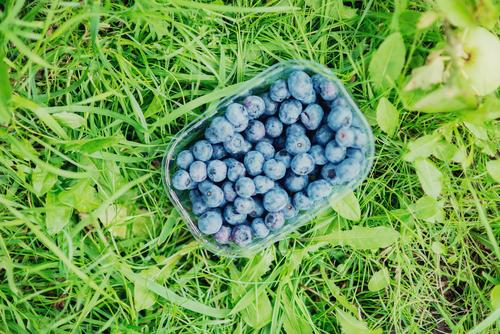 Vacation & Travel Blue Relaxation Healthy Eating Life Grass Freedom Food Lifestyle Fruit Leisure and hobbies Tourism Nutrition Trip To enjoy