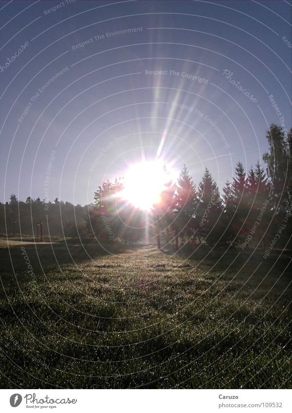 Tree Sun Forest Grass Bright Rope Radiation Boredom Dazzle Celestial bodies and the universe Arise
