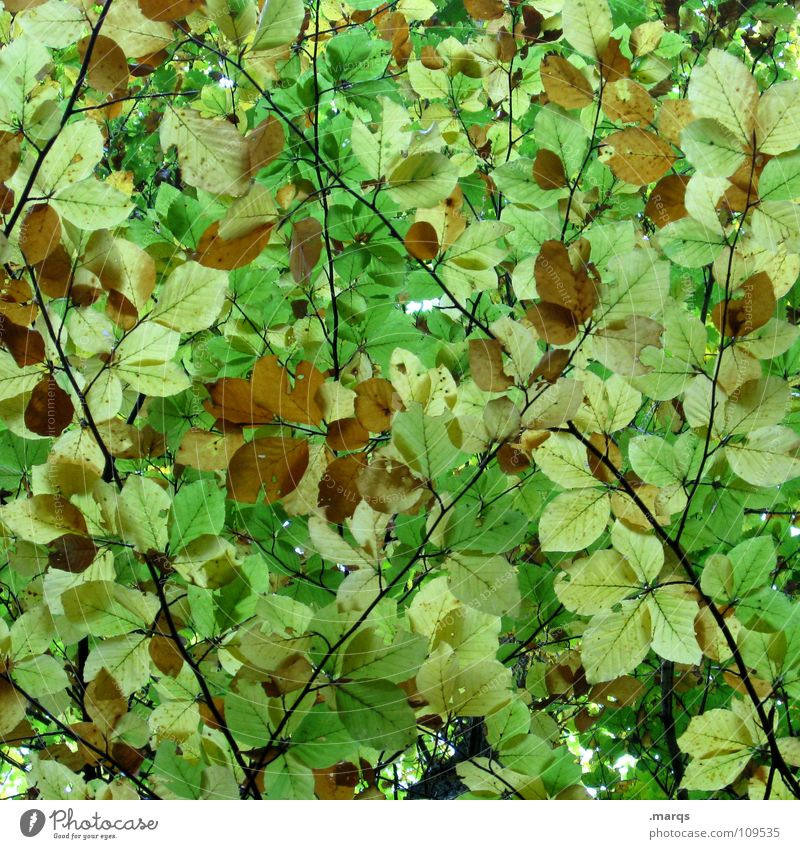 Impenetrable Leaf Green Bright green Forest Closed Growth Juicy Force Tree Photosynthesis Plant Botany Autumn Undergrowth Wood flour Nature Transience Branch