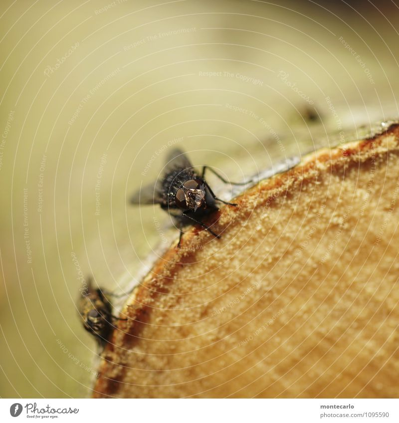 Nature Tree Animal Black Environment Eyes Natural Wood Small Brown Wild animal Authentic Fly Wing Soft Near