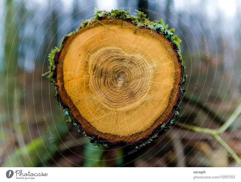 Annual Rings Nature Old Tree Forest Life Wood Time Circle Historic Moss Ecological Tree bark Surface Flat Ancient