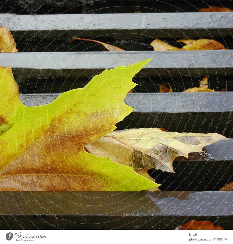 Leaf Winter Far-off places Yellow Street Cold Autumn Lanes & trails Brown Lie Posture To fall To hold on Sidewalk Stalk Traffic infrastructure