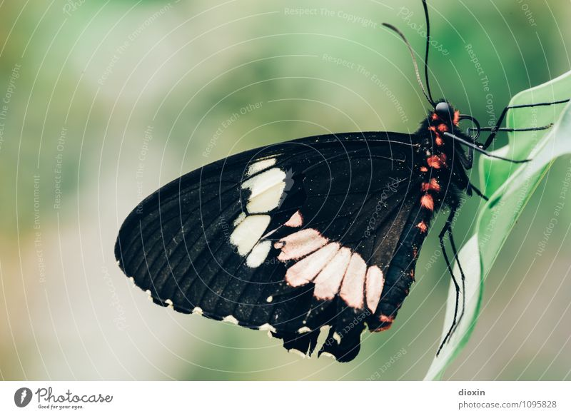 Nature Beautiful Animal Natural Small Sit Wing Insect Butterfly Ease Exotic Virgin forest Cuddly Feeler Compound eye