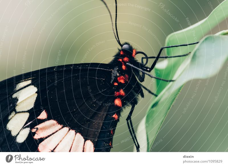 Nature Plant Leaf Animal Natural Small Wild animal Sit Wing Near Insect Pelt Butterfly Exotic Virgin forest Easy