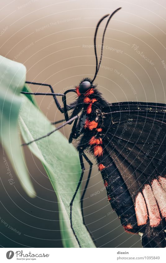 Nature Animal Small Wild animal Sit Wing Pelt Butterfly Exotic Virgin forest Ease Crawl Delicate Feeler Compound eye