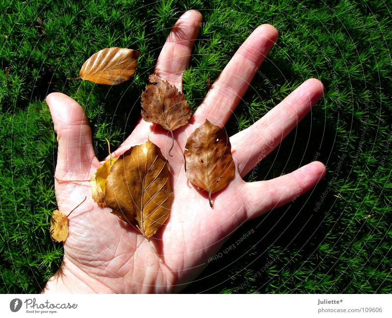 autumn feeling Hand Grass Leaf Touch Emotions Autumn Green Brown Fall down Transience five fingers
