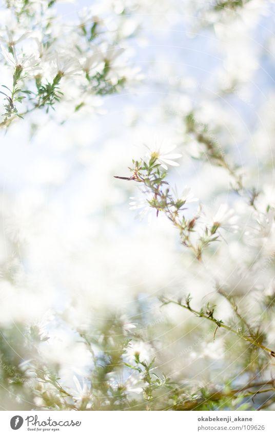 autumn snow Light flower october white atmosphere morning