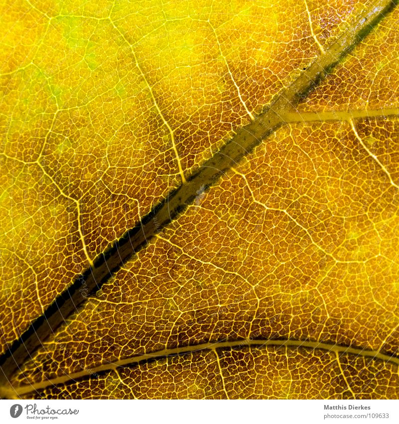 THE HERBST III Autumn leaves Autumnal Autumnal colours Rachis Yellow Macro (Extreme close-up) Section of image Background picture