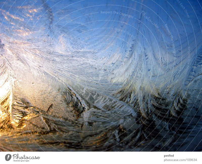 ...it was a cold night... Frostwork Winter Cold Pattern Sunrise Yellow Black Window Pane Ice Morning in the morning Blue Orange Feather Glass Nature Graffiti