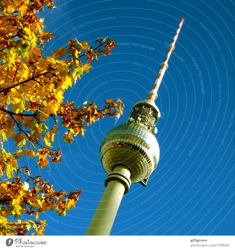 Sky Blue Tree Leaf Autumn Berlin Art Tourism Tower Television Beautiful weather Monument Landmark Radio (broadcasting) Downtown Berlin Tourist Attraction
