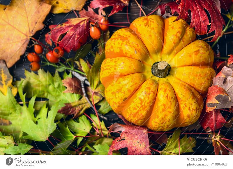 Pumpkin with colourful autumn leaves Food Vegetable Lifestyle Style Design Garden Feasts & Celebrations Thanksgiving Hallowe'en Gardening Nature Autumn Rose
