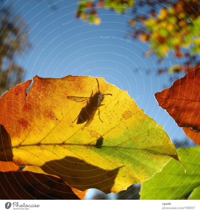 what are you looking for? Autumn Multicoloured Leaf Green Yellow Brown Red Autumnal colours Tree Wasps Insect Search Alert Feeler Rachis Arrangement Square