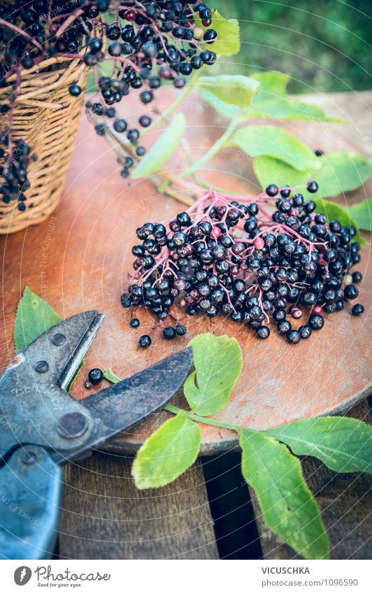 Elderberries and old garden shears Food Fruit Nutrition Organic produce Vegetarian diet Diet Lifestyle Style Design Healthy Eating Summer Garden Table Nature