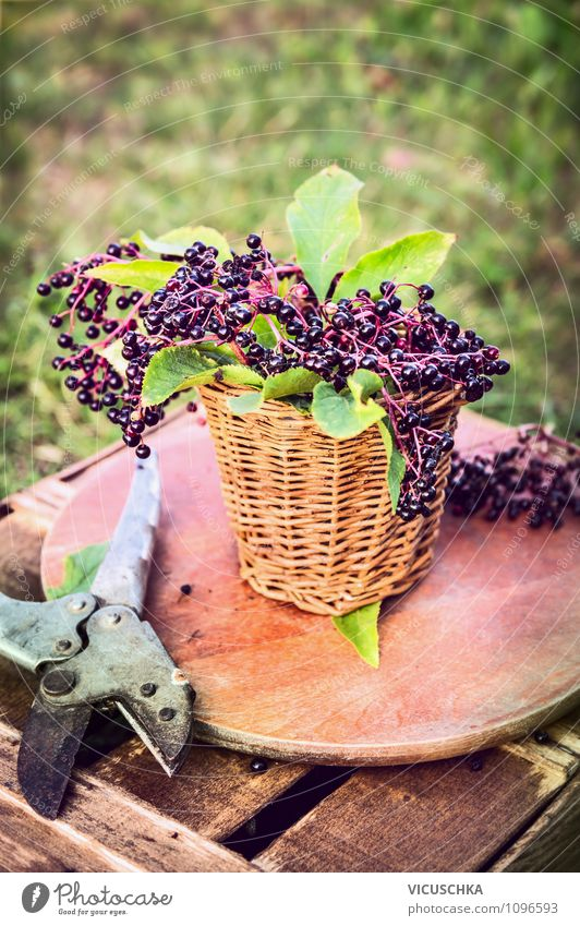 elderberry on the garden table Food Fruit Dessert Nutrition Organic produce Vegetarian diet Diet Lifestyle Style Design Healthy Eating Garden Nature Summer