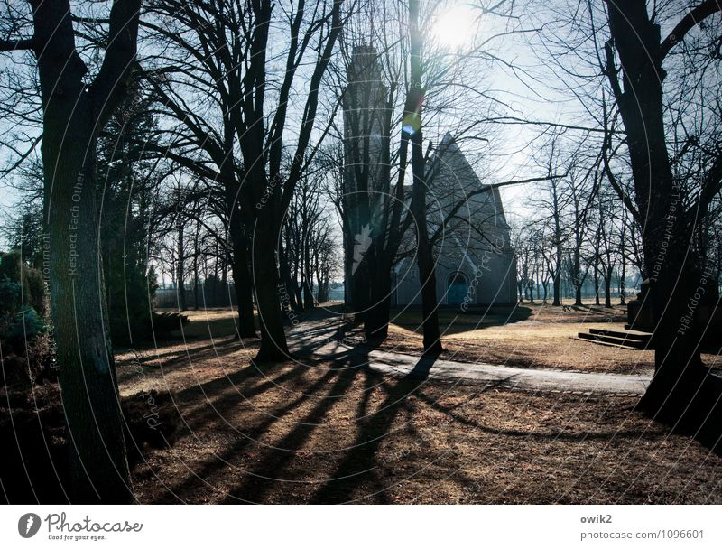 town church Environment Nature Cloudless sky Winter Beautiful weather Plant Tree Twigs and branches Sparse Bleak Park Meadow Falkenberg Brandenburg Germany