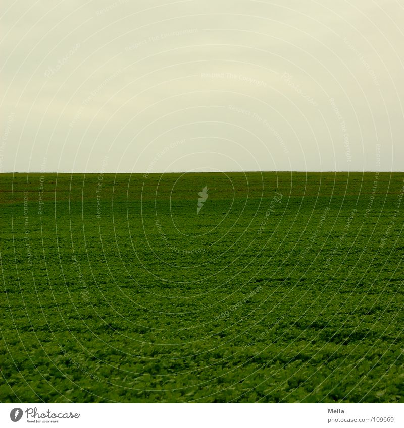 A wide field Field Green Meadow Gray Bad weather Clouds Far-off places Empty Air Sky Free Freedom two thirds one third