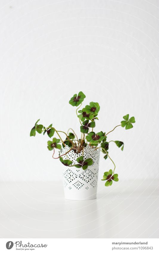 Good luck. Nature Plant Leaf Foliage plant Pot plant Clover Cloverleaf Four-leaved Green Happy Life Chaos White Growth New New Year's Eve Happiness Colour photo