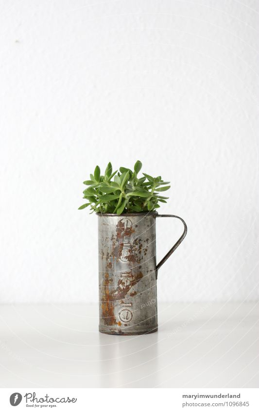 green stuff I Nature Plant Animal Cactus Leaf Foliage plant Pot plant Exotic Succulent plants Fresh Juicy Green White Old Rust Jug Free space Colour photo