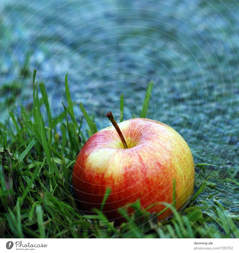 eat me Round Red Green Delicious Nutrition Damp Fluid Grass Edge Blade of grass Food Sweet Vegetarian diet Fruit Apple Blue Part Coast River Stalk Nature Anger