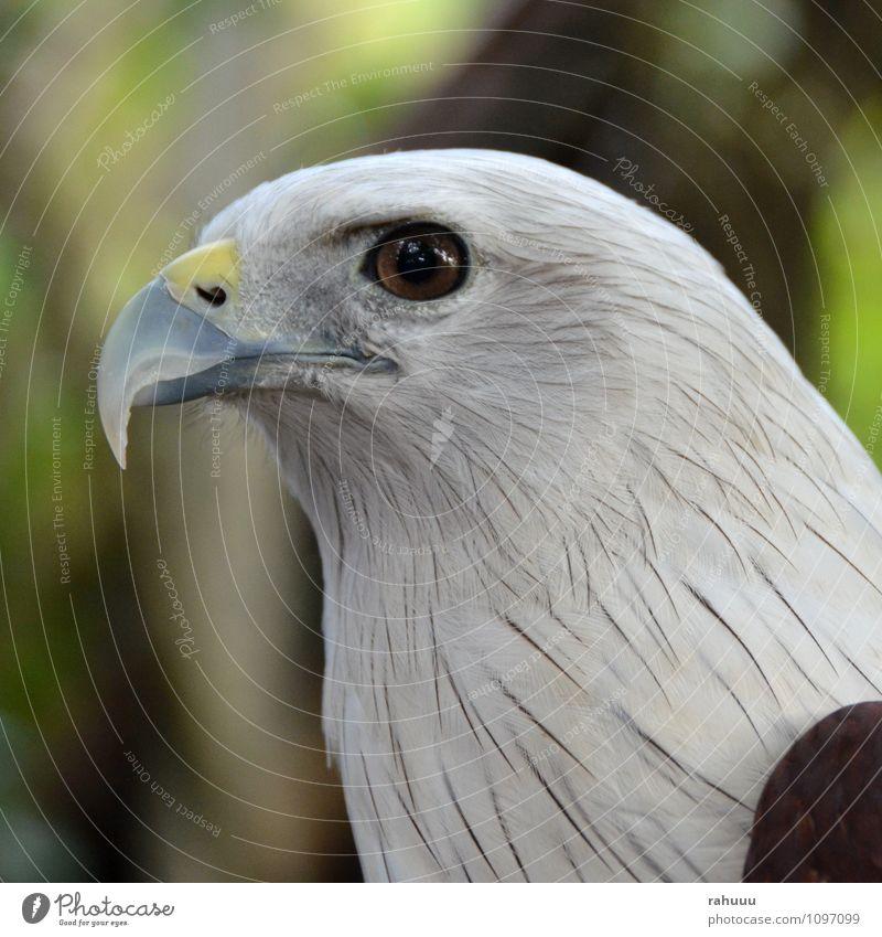 Beautiful White Animal Yellow Gray Brown Bird Wild animal Authentic Animal face Zoo Smart