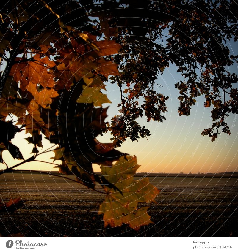 Tree Red Plant Sun Leaf Landscape Cold Food Autumn Dream Horizon Brown Background picture Earth Field Gold