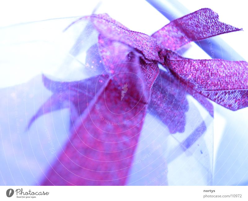Gift! Bow Packaging Red Glittering Macro (Extreme close-up) Close-up Packaged Blue Valentine's Day