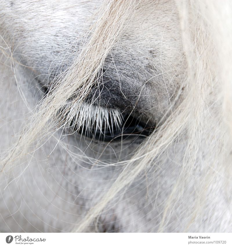 Hair and hairstyles Sadness Large Transport Horse Grief Near Pelt Distress Mammal Eyelash Strand of hair
