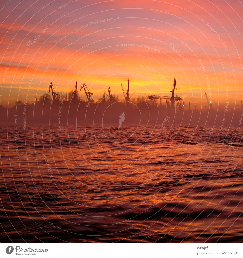 Cranes in Love Sunset Port of Hamburg Romance Ocean Jetty Fog Dusk Beautiful Harbour Sky